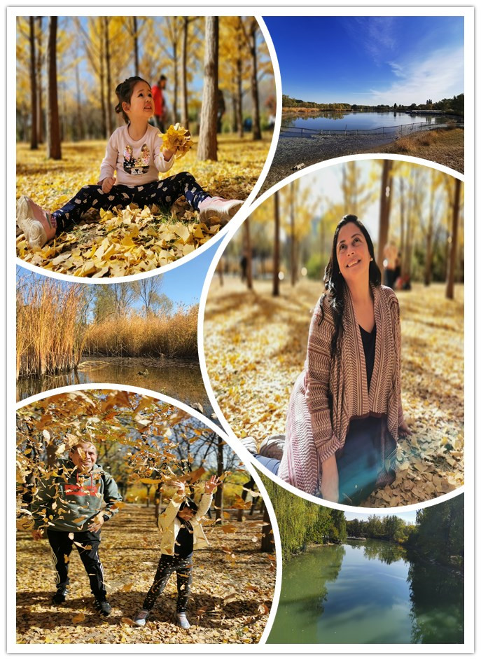 Closer to Nature in Golden Autumn——Jindao Property Department Organized a Visit for Diplomatic Missions